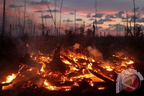 Kebakaran perkebunan sawit di Sumbar