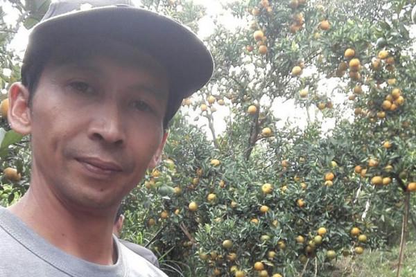 """Mengolaborasikan agribisnis-wisata """"jeruk dau"""" melalui Bumdes"""