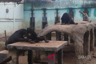 Taman Rimbo Jambi wisata edukasi anak-anak