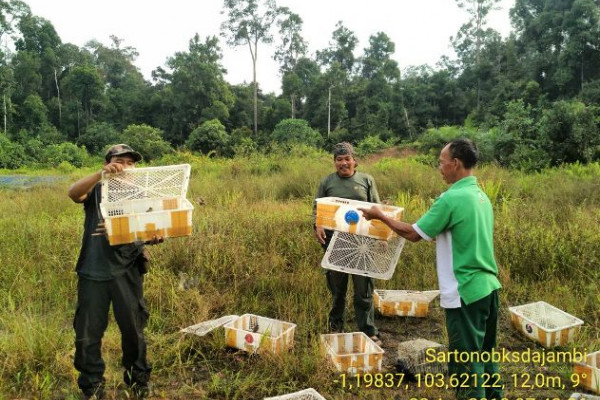 BKSDA Jambi lepasliarkan ratusan burung kicau