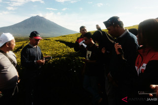 BUMN Hadir- SMN Maluku Utara takjub panorama kebun teh Kayu Aro