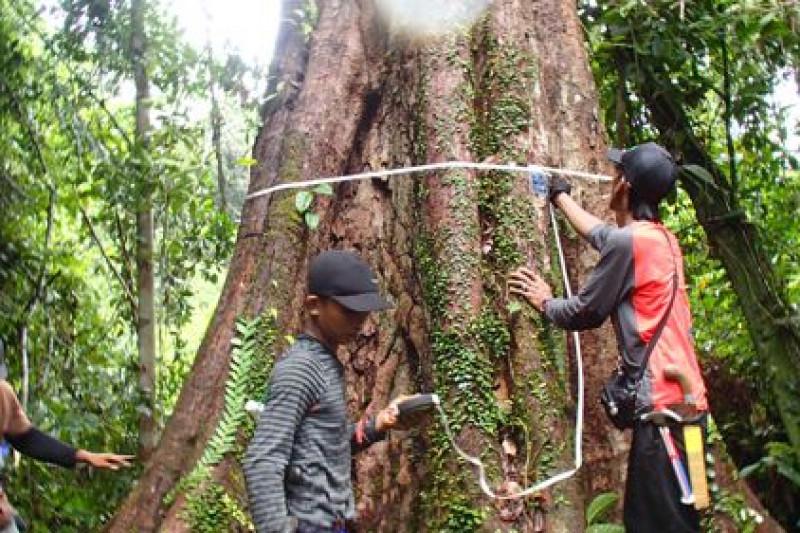 Peraih emas Asian Games asuh pohon di Tanjabtim