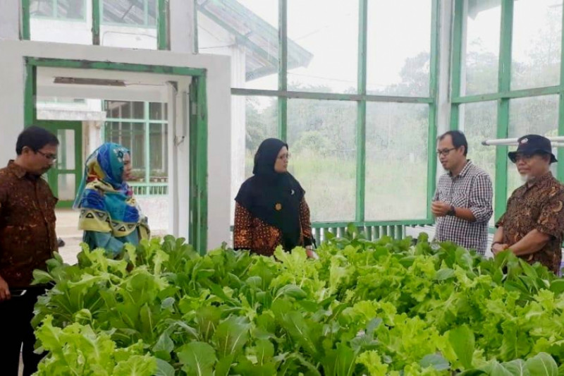 Peneliti Unja kembangkan pertanian cerdas berbasis internet