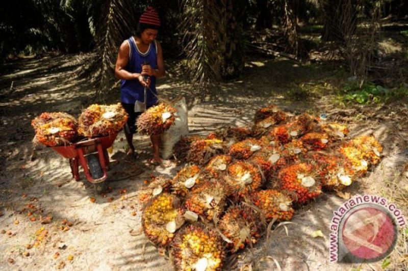 WWF sebut perlu komitmen politik untuk penerapan sawit berkelanjutan