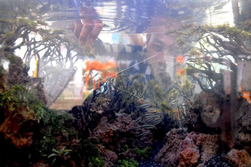 """Mahasiswa Unja kembangkan """"Aquascape"""" bidik penghobi ikan hias"""