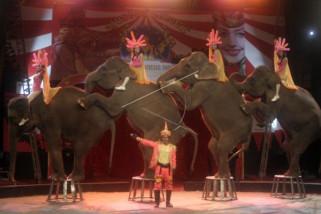 Mari mengenal muasal sirkus
