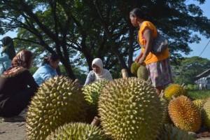 Musim Durian Lokal