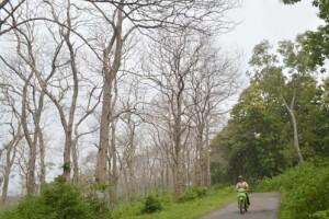 230.000 Bibit Pohon Ditanam Hari Menanam Pohon di Tuban