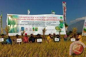Ngawi Tingkatkan Produktivitas Padi dengan Sistem Salibu