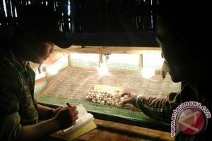 Prajurit TNI Pamekasan Bina Warga Beternak Puyuh