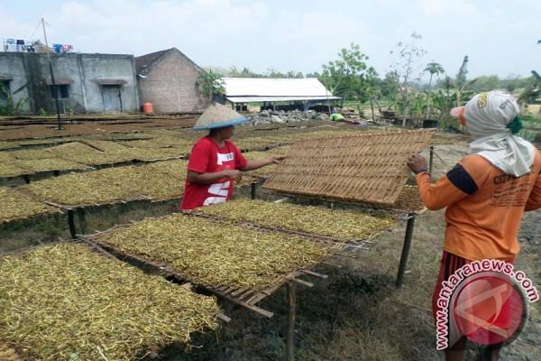 AMTI : Kenaikan Cukai Jangan Korbankan Petani Tembakau