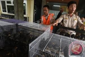 BBKP Surabaya Amankan Ribuan Burung Selundupan