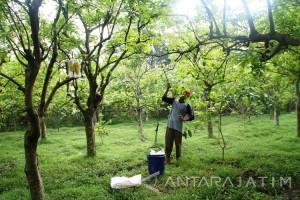 Pengamat: Agrowisata di Jatim jadi Destinasi Alternatif