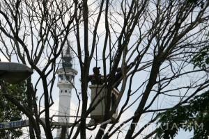 Puluhan Petugas Disiagakan Waspadai Pohon Tumbang