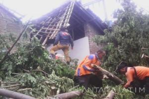 Tujuh Rumah di Situbondo Rusak akibat Longsor dan Pohon Tumbang