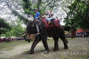 Liburan Di Kebun Binatang Surabaya