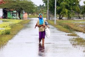 173 Hektare Lahan Pertanian Sidoarjo Terkena Banjir