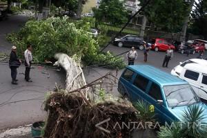 Madiun Pangkas Pohon Antiisipasi Cuaca Buruk