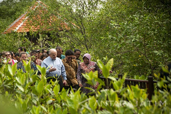 Surabaya to Develop Mangrove Botanical Garden