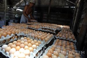 Bank Indonesia Kediri Persiapkan Klaster Telur Ayam di Blitar