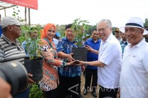 Menteri Perdagangan Tanam Pohon di City Forest Jember
