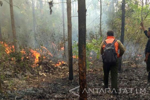 Tim BPBD Bojonegoro Padamkan Kebakaran Hutan Setren