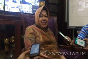 Risma : Kebun Raya Mangrove Surabaya Dibangun Tahun Ini