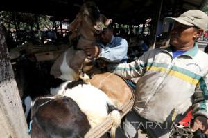 Pemkot Kediri Intensif Pantau Penjualan Hewan Kurban