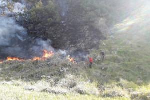 Luas Kebakaran Hutan di Gunung Bromo Capai 76 Hektare
