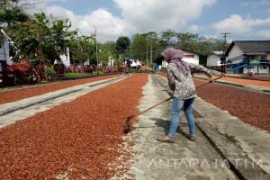 Mengenal Dusun Kakao Banyuwangi