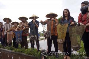 KKP Kunjungi Gondosuli Dorong Pembudidaya Ikan