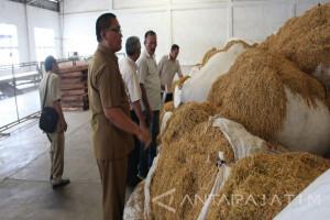 7.000 Hektare Luasan Realisasi Tanam Tembakau di Kabupaten Probolinggo