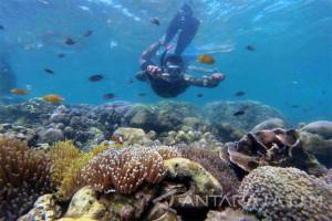 Serunya Bersnorkeling di Pulau Gili Ketapang Probolinggo (Video)