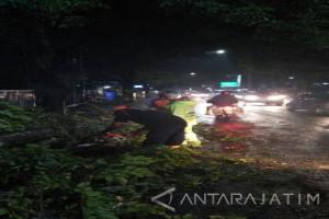 Sejumlah Pohon di Malang Bertumbangan Akibat Hujan-Angin