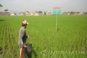 7.541 Ton Pupuk Bersubsidi Tambahan untuk Kabupaten Probolinggo