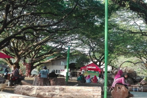 Menikmati Kerindangan Hutan Trembesi di Tengah Kota Madiun