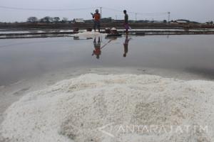 Musim Hujan Datang, Petani Garam di Probolinggo Berhenti Produksi