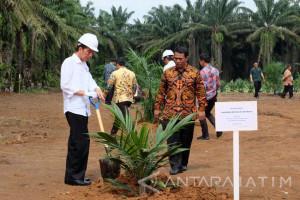Jokowi Akui Kelapa Sawit Rakyat Indonesia banyak