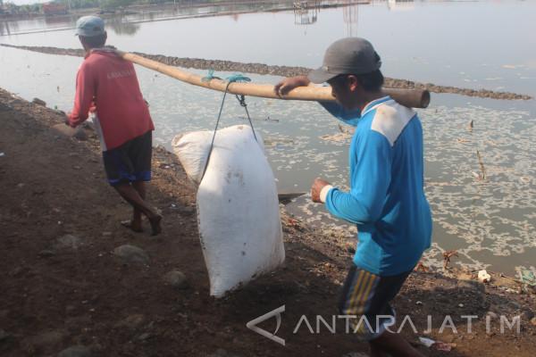 Banjir Rob Sebabkan Penyusutan Garam di Probolinggo