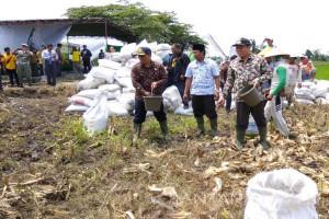 Wabup Situbondo Ingatkan Petani Gunakan Pupuk Organik