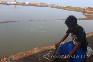 Lahan Tambak Ikan di Probolinggo Diterjang Banjir Rob