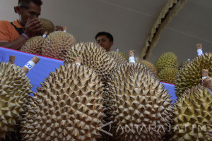 Festival Durian Ngawi
