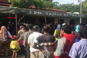 Jumlah Pengunjung di Kebun Binatang Surabaya Meningkat