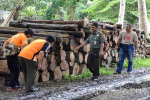 Rp1,3 Miliar Kerugian Negara Akibat Ilegal Logging di Perhutani Jember (Video)