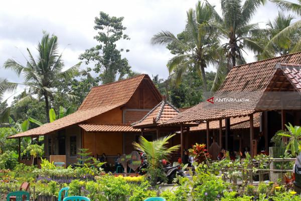 Rumah Adat Suku Osing Antara News Jawa Timur