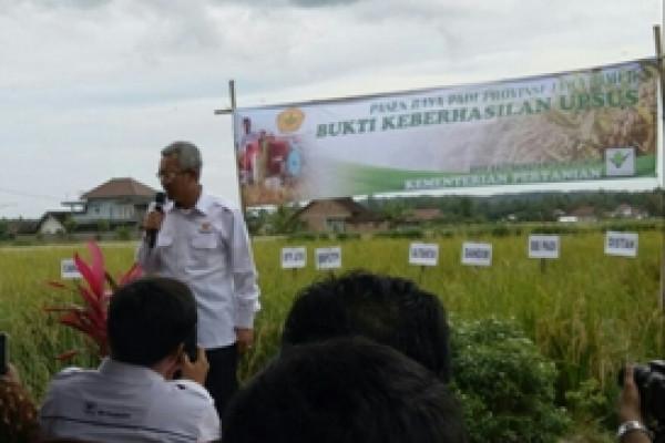 Kabupaten Malang Panen Perdana Padi Ciherang