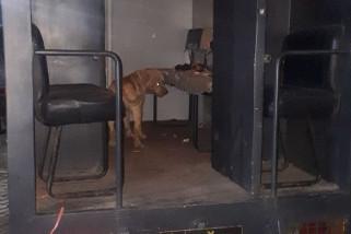 Pemilik Anjing Pembunuh Diperiksa