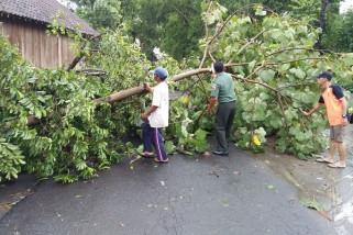 Warga Kediri Meninggal Tertimpa Pohon