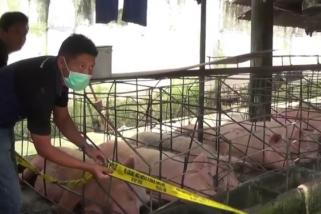 Peternakan Babi di Blitar Ditutup