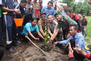Rawan Longsor, Forkopimda Jember Tanam 1.000 Pohon